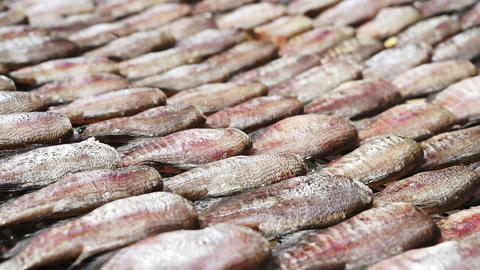 Close up of fish fillets drying on a wicker table in Southeast Asia. Salted Footage