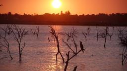 Sunset with birds,Batticaloa,Sri Lanka Footage