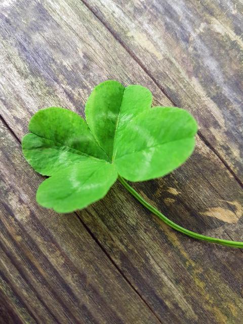 Four-leaf clover on wooden Background Fotografía