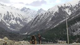 Man with transport donkeys goes back to Village,Chitkul,India Footage