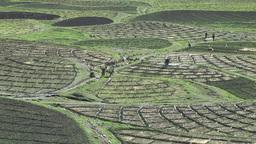 Farming field structure in Ki village,Ki,India Footage