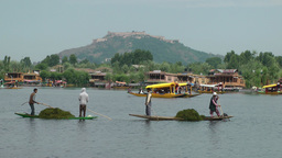 Men Take Grass From Dal Lake,Srinagar,Kashmir,India stock footage