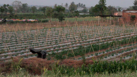 Cultivation of vegetables in India Footage