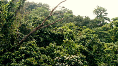 Tropical rain forest to appeal to Indian ocean slopes Live Action