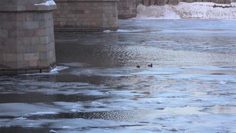 Ducks under the bridge in winter Footage