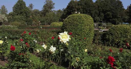 Rose bushes in the park Footage