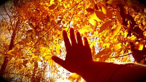 Movement hand sun leaves fall ビデオ