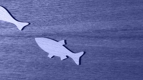 Fishes silhouette aquarium Animation