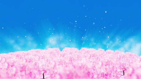 Spring forest landscape illustration, Abstract nature background, Cherry blossom Animation