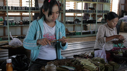 Girls making sigars on a Inle Lake factory Footage