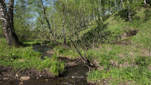 Creek in the woods Footage