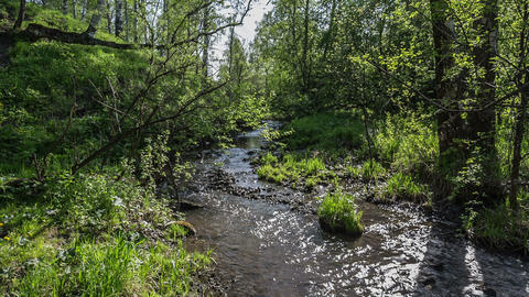Creek in the woods3 Footage