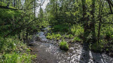 Creek in the woods4 Footage