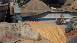 Turkey Aegean coast Aydin Province Kusadasi dog sleeps on... Stock Video Footage