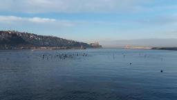port sea and seagulls Footage
