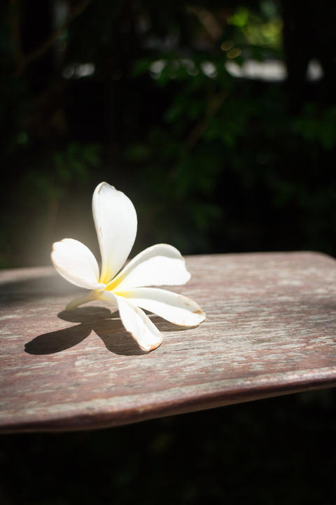 White Flower On Wooden Bench Photo