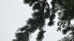 Winter Snowfall HD Footage 3 Footage