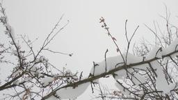 Winter Snowfall 2K Footage 4 Footage