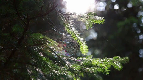 In the forest on the tree spider web with a spider on the... Stock Video Footage