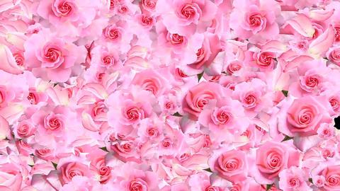 PINK ROSES FULL FRAME GIF