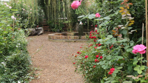 Reality relax time along the way of rose garden Footage