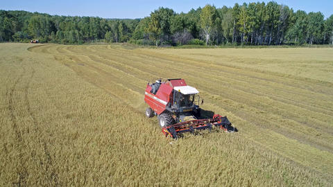 Harvester Working on the Oat Field Footage
