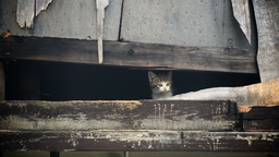 Homeless Kitten Meows to Get Attention Stock Video Footage