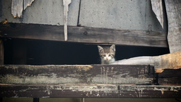 Homeless Kitten Meows To Get Attention stock footage