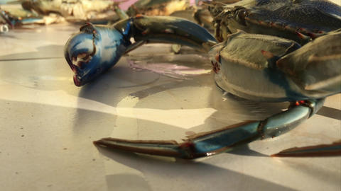 Stirring Cheliped and Swimming Legs of Blue Crab Footage