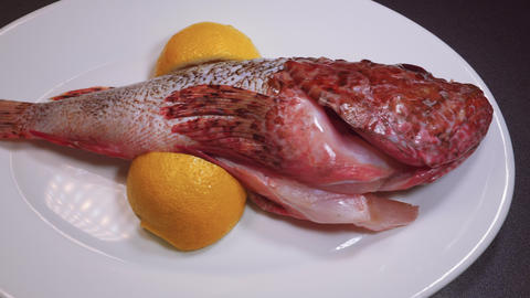 Fresh whole scorpion fish ready to cook slider panning shot Live Action