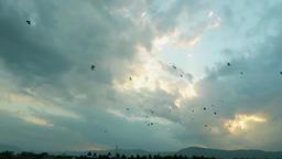 Birds Fly Theni,India ビデオ