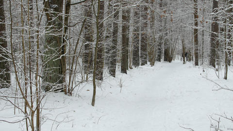 A man runs in the winter on a forest path ビデオ