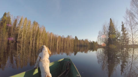 Dog Floating in Boat During Flood Footage