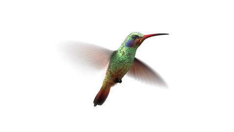 rotating humming bird Animation