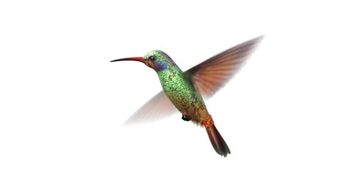 rotating humming bird Stock Video Footage