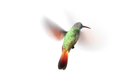 rotating humming bird Stock Video Footage