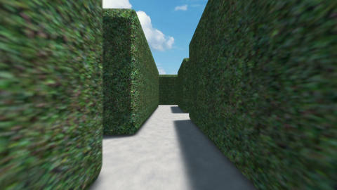 Hedge Maze Journey Stock Video Footage