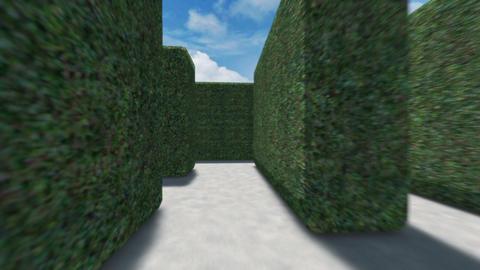 Hedge Maze Journey Stock Video Footage