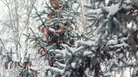 Snowy winter forest Stock Video Footage