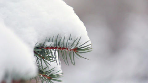 Branch of fir tree in snow Stock Video Footage