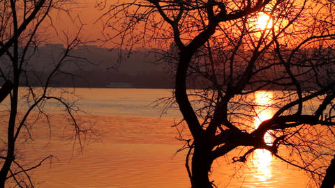 Tree silhouette in sunset paints Stock Video Footage