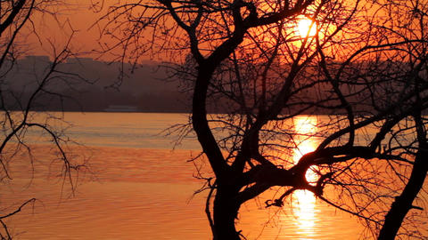 Tree silhouette in sunset paints Footage