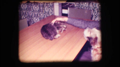 Vintage 8mm. Dog barking at frightened cat Footage