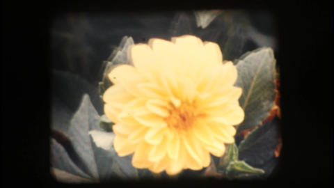 Vintage 8mm. Close up of flowers Stock Video Footage