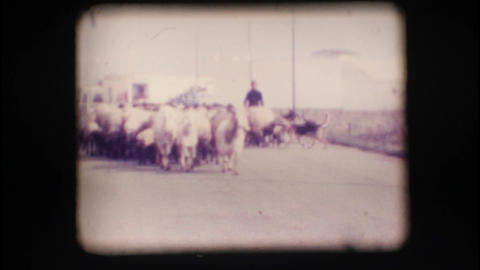 Vintage 8mm. Herd of sheep Stock Video Footage