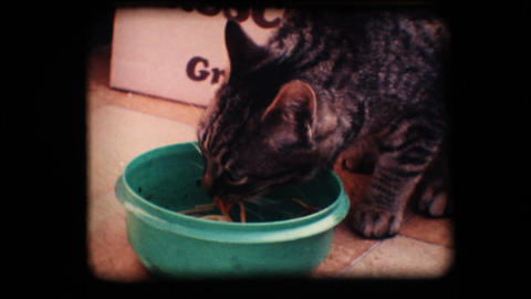 Vintage 8mm. Cat eating Footage