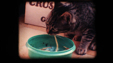 Vintage 8mm. Cat eating Stock Video Footage