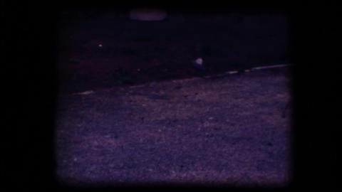 Vintage 8mm. Pigeon flying away Stock Video Footage