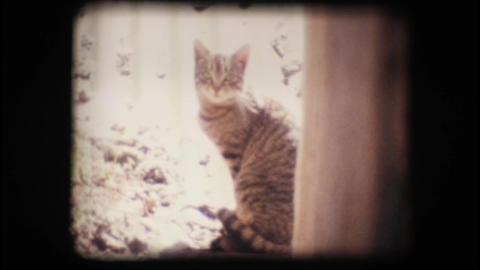 Vintage 8mm. Cat looking at the camera Stock Video Footage