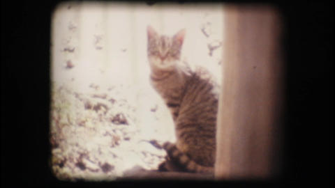 Vintage 8mm. Cat looking at the camera Footage